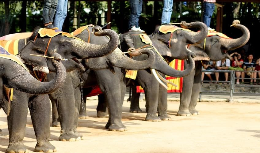 Pattaya Phuket Turu