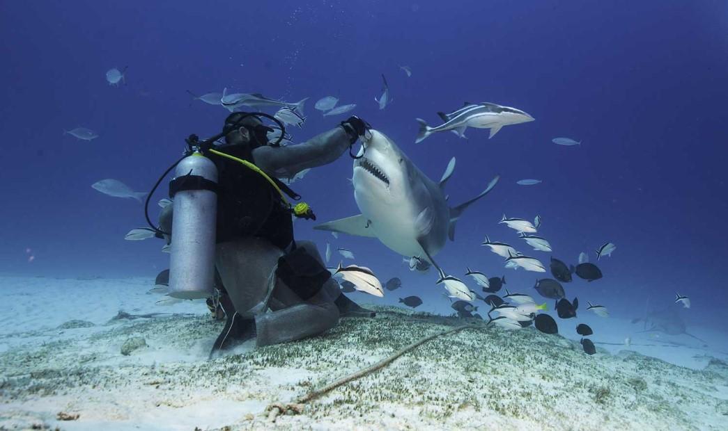 Bahamalar'da Köpekbalıklarıyla Dalış