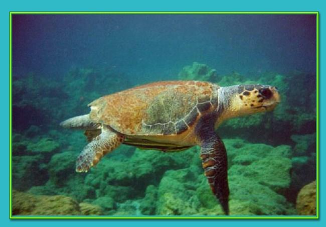 DALYAN (Turtle Beach)